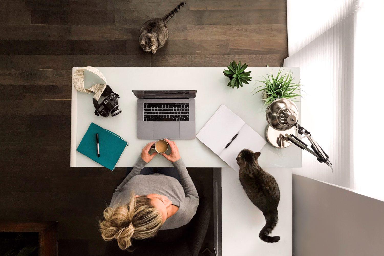 woman working at desk kitties kitten remote workfromhome
